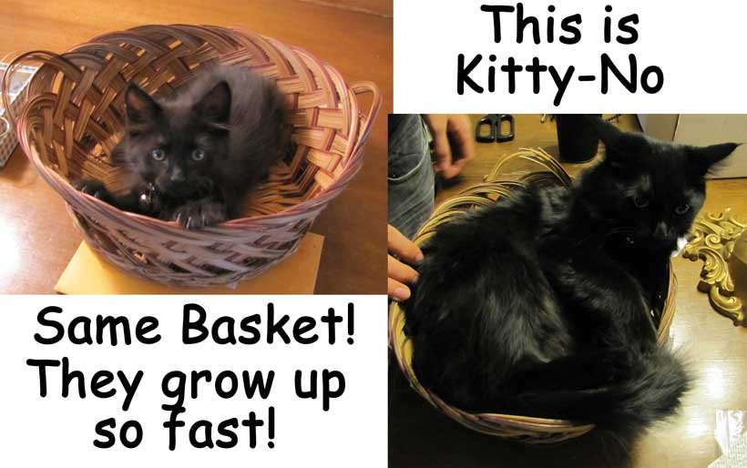 Kitty No in the basket then and now