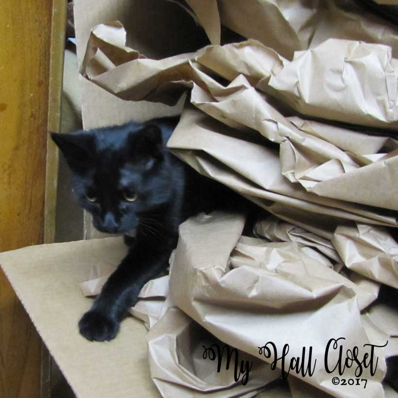 Kitty and a pile of packing paper
