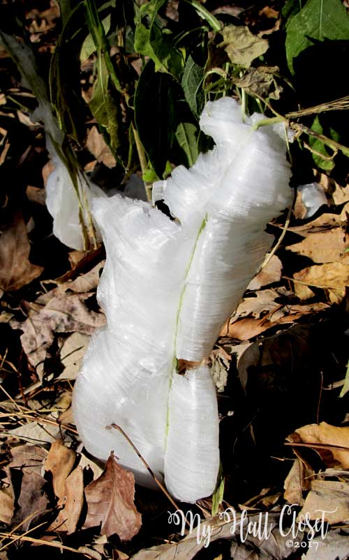 Discovering Frost Flowers and Ice Flowers in East Texas