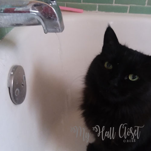 Kitty No's morning routine water from the faucet
