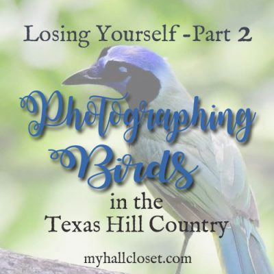 Photographing Birds in the Texas Hill Country – Losing Yourself Part 2