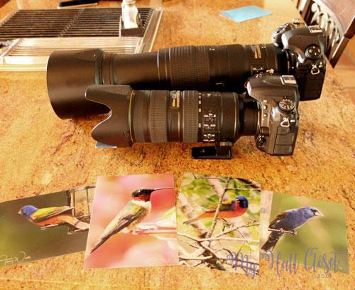 Temi's Nikon D850 and Nikon 200-500mm zoom