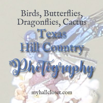 Texas Hill Country Photography – Dragonflies and Cactus