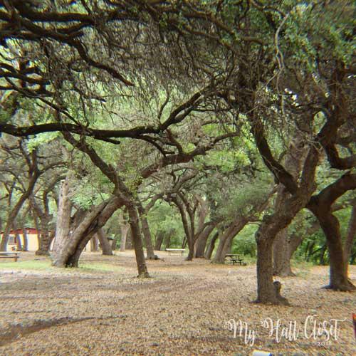 Chaulk Bluff twisted trees