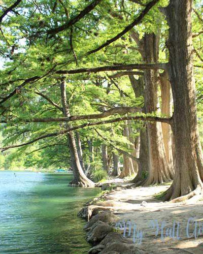 Garner State Park Cypress Trees